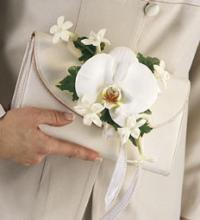 Cymbidium Orchid Adornment