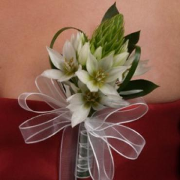 Star of Bethlehem Corsage