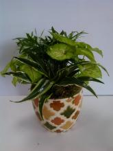 Dish Garden in Ceramic Pot